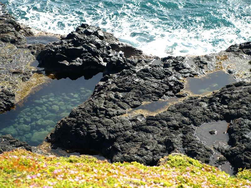 The Nobbies, Philip Island, September 2012